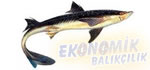Camgöz Köpek Balığı Ekonomik balıkçılık