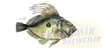 Dülğer Ekonomik balıkçılık