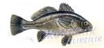 Eşkina Ekonomik balıkçılık