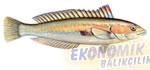 Güneş Balığı Ekonomik balıkçılık
