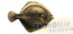 Kalkan Balığı Ekonomik balıkçılık