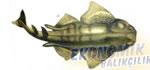 Keler Balığı Ekonomik balıkçılık