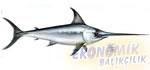 Kılıç Balığı Ekonomik balıkçılık