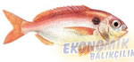Lekeli Mercan Ekonomik balıkçılık