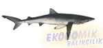 Mavi Köpek Balığı Ekonomik balıkçılık