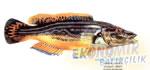 Ördek Balığı