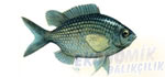 Papaz Balığı Ekonomik balıkçılık