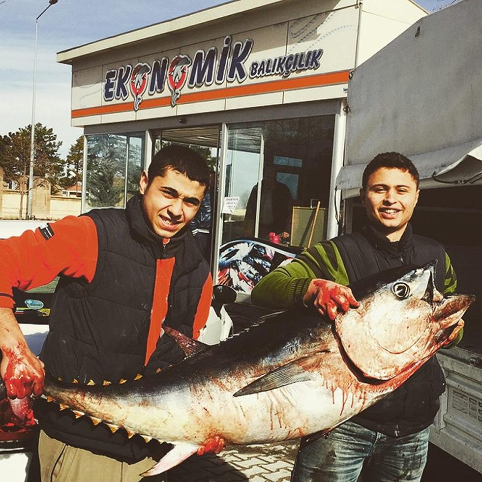 orkinos-2Nevşehir'de ki Balık fiyatları